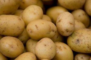 Hvordan holde Poteter Fra Spirende i Storage
