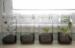Har plantene vokser fortere i lys eller mørk?