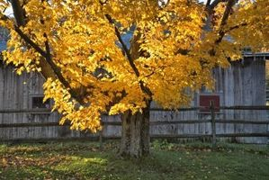 Best Shade Trees for Zones 5 & 6