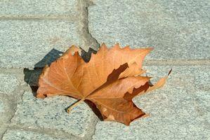 Effekter av infrarødt lys på plantevekst