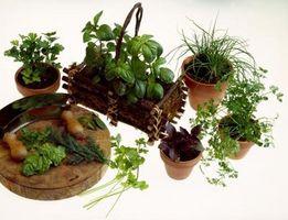 Hvordan å dyrke urter i en Trash Can