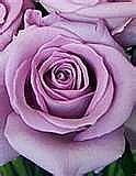 Hvordan bli kvitt Bugs på Roses, Green Way