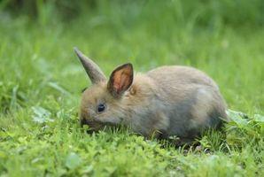 Perennial Planter som Kaniner Eat