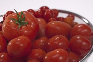 kniping av tomatplanter