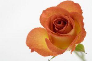 Hjemmelaget Organic Rose Food