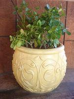 Hva er årsakene til Svart Tips om Leaves på innendørs planter?