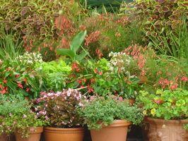 Design Ideer for en Lean-To Greenhouse