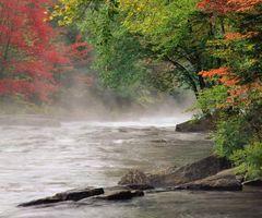 Hvordan å plante en River Birch Tree