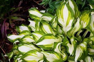 Leafy Garden Plants