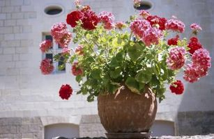 Slik fjerner Hvit, Kritt Innskudd fra Clay Blomsterpotter