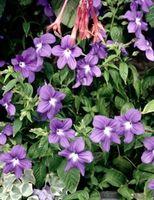 Planter for en Shady Rock Garden