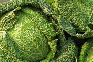 Jordsmonnet Krav til Brassica