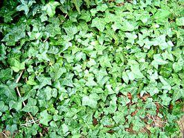 Bunndekkende planter til skråning