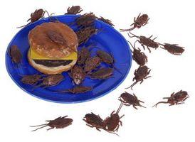 Er det OK å Vacuum Døde kakerlakker?