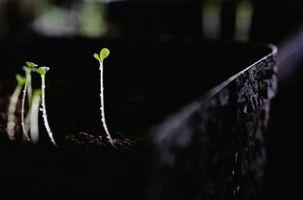 potetkasser til growing