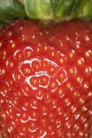 Hvordan Grow Jordbær i Hay Bales