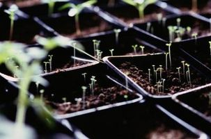 Hvordan bygge en Seedling skuff Med en Grow Lys