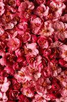 Red Blomstrende trær