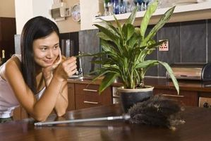 Hvordan bruke husholdningsartikler å vokse Stor Potteplanter