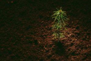Rør for små trær