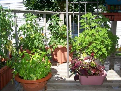 Hvordan lage en Container Garden