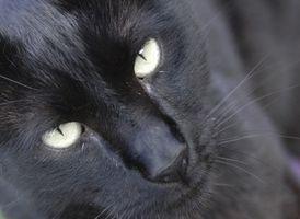 Best Hjem rette for Cat urin lukt