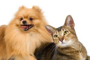 Plen Problemer med Cats & Dogs