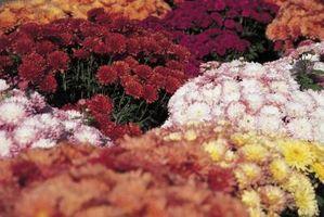 I hvilken type jord Gjør Flower plantene vokser best?