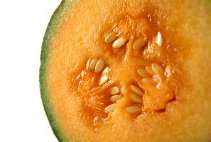 Hvordan til Store canteloupe frø til neste års Planting