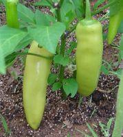 Hvordan Grow Gule Wax Peppers