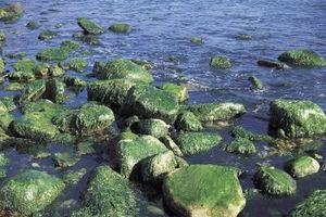hva er alger