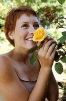 Ved å plante en vinter Hardy Rose i sone 6
