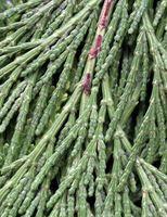 Hvordan bruke Cedar Mulch på Veggie Planter
