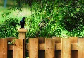 Hvordan lage Privacy Fence Rails