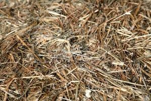 Den Stout Metode for Planting Poteter