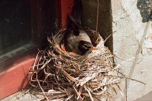 Hvordan holde Birds Fra Nesting i en garasje