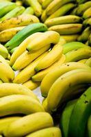Informasjon om Dwarf Pink Banana Plant