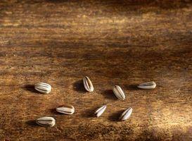 Forskjeller av Black & Yellow Sunflower Seeds