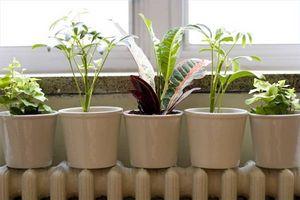 Hva er forskjellene mellom innendørs planter og utendørs planter?