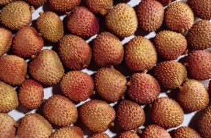 The Care of Lychee Trees