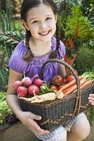 Hvorfor er det viktig å sette opp en grønnsakshage?