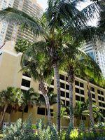 Gulfarging av Palm Tree Leaves
