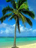Hvordan kjøpe Palm Trees