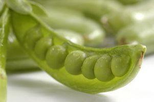 Hvordan Grow Snap Peas Fra Seed