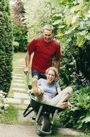 Hvordan bruke Arborvitae i en Cottage Garden