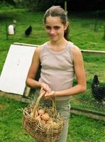 Riktig Håndtering av Farm Fresh Eggs