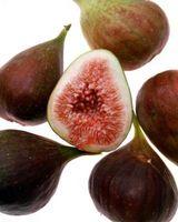 Svart Fig Trees