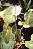 Shade Planter for en Balkong Hage