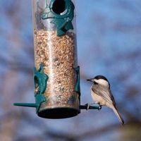 Hvordan å rense en Outdoor Bird Feeder