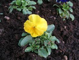Fire hoveddeler av en blomstrende plante